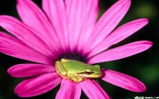 社 林楠 我与青蛙